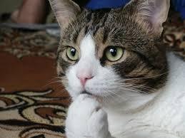 cat-hmmm